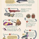Commonly Confused Animals