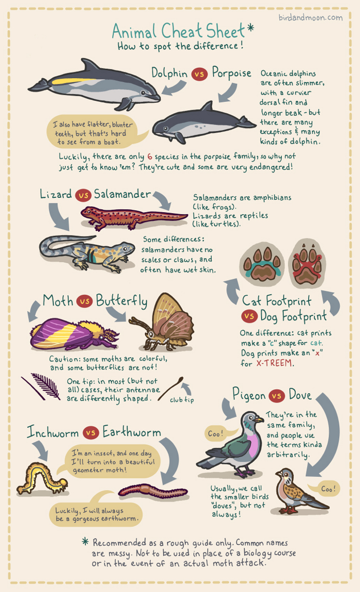 commonly-confused-animals